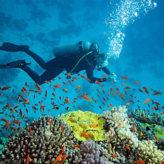 Scuba Diving at Grande Island- Goa - Tour