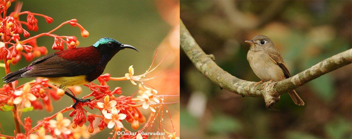 Birding Package in Goa (3 days/2 nights) - Tour