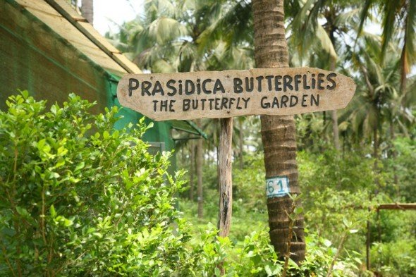 Butterfly Trip with breakfast - Tour