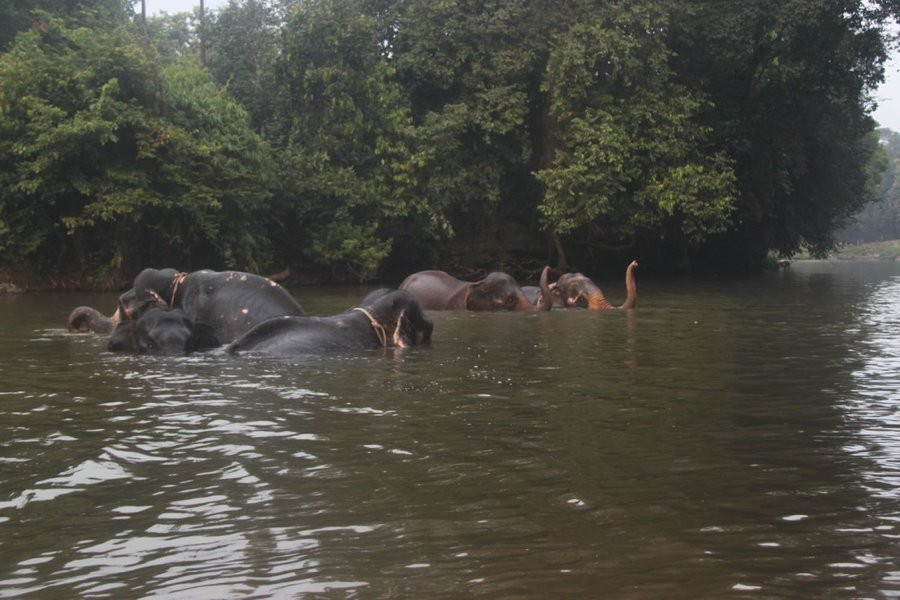 Swim with Elephant - Tour