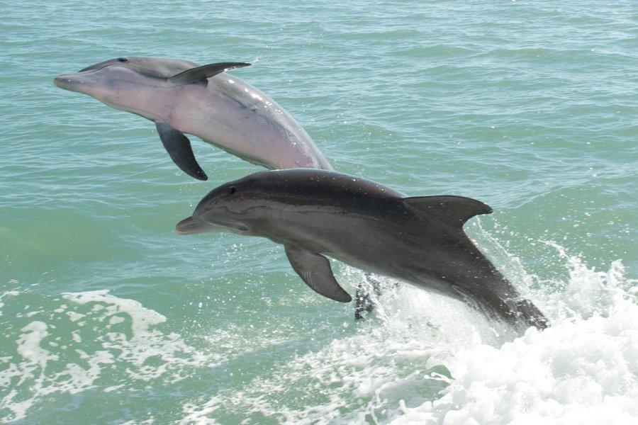 Dolphin Tour in Goa - Tour