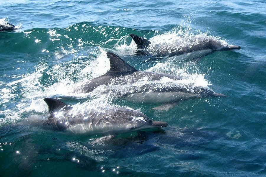 Dolphin Boat Ride - Tour