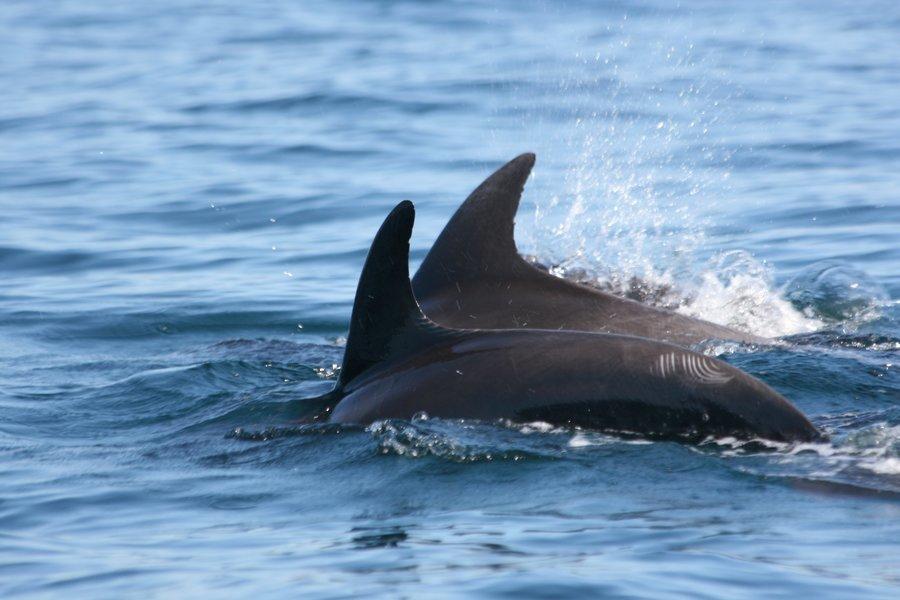 Dolphin Trip - Tour