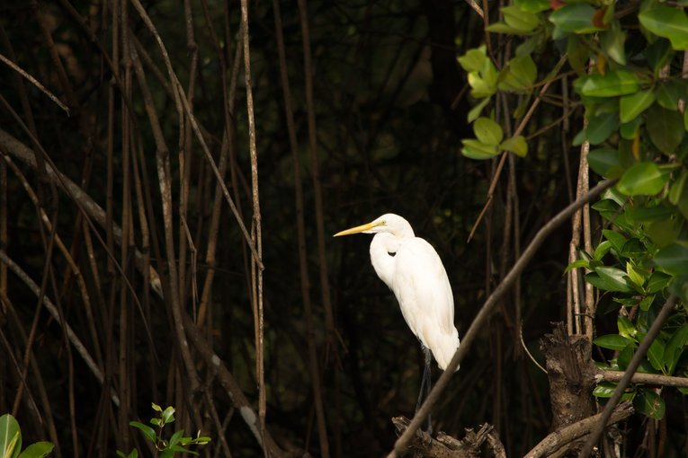 River Cruise & Bird Watching - Tour