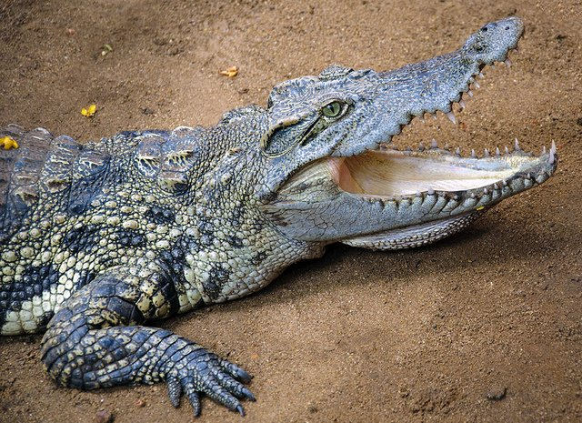 Crocodile cruise, bird watching and old Goa churches - Tour