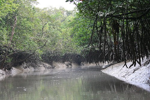 Sundarban Tour- 2 Nights/3 Days - Tour