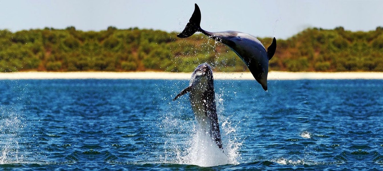 Cruising trip with dolphin spotting - Tour