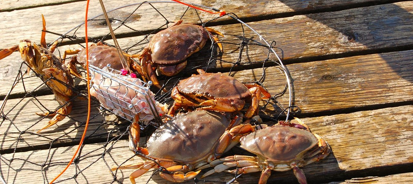 Crab catching trip - 4 hours at Calangute - Tour