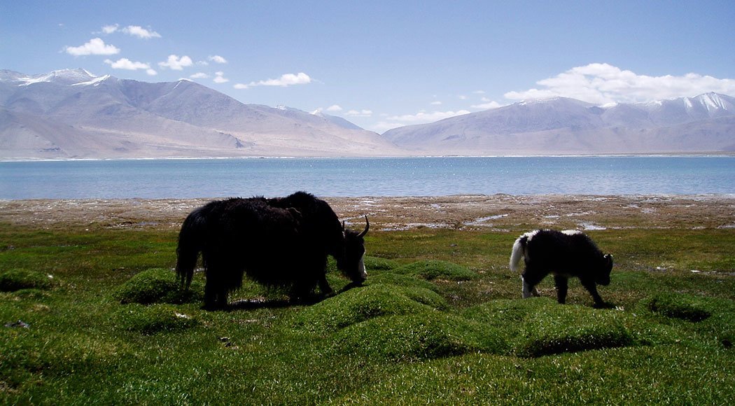 Tso Moriri Lake Trek - Tour