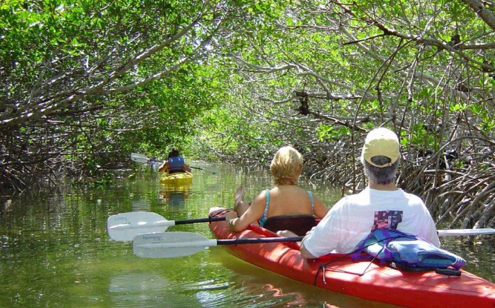 Mangrove Kayaking - Tour