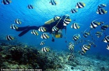 PADI Scuba Diving - Tour
