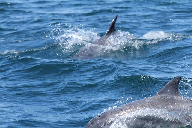 Dolphin Safari - Tour