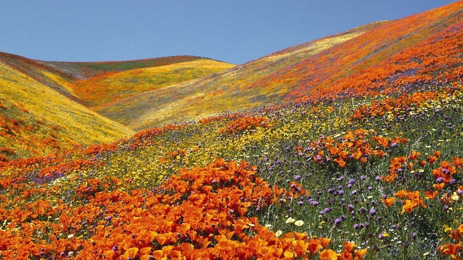 Valley of flowers trek - Tour