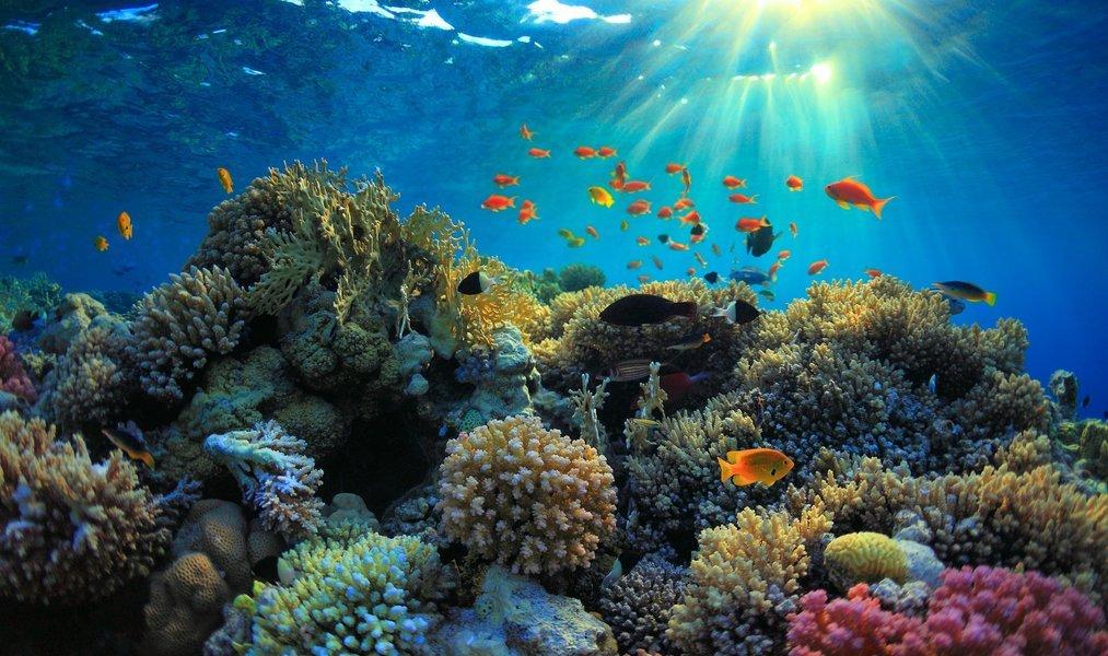 Nusa Penida Snorkeling Trip From Nusa Lembongan - Tour