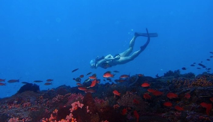 Scuba Diving day trip from Bali to Nusa Lembongan and Nusa Penida - Tour