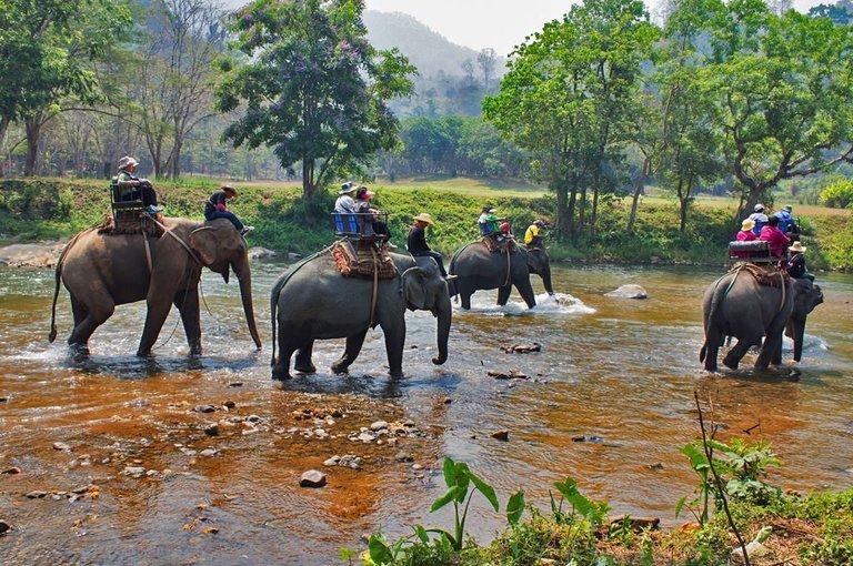 Khao Sok Jungle Safari Tour - Tour