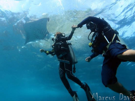 Indo Divers Scuba in Lembongan & Penida - Tour