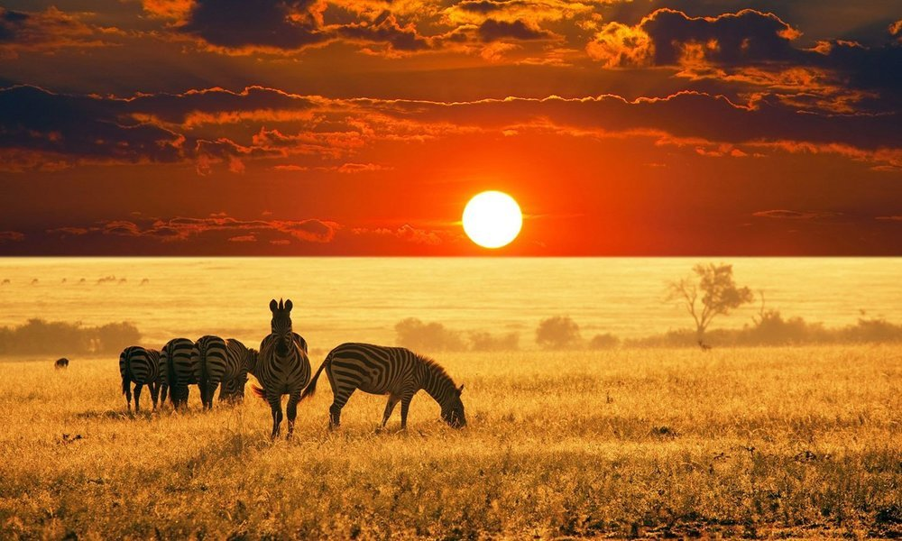 Africa Tours - Collection