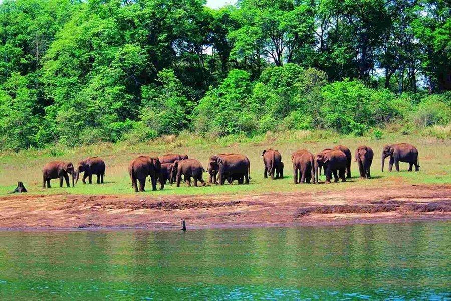 Kovalam - Kanyakumari - Madurai - Munnar - Thekkady - Alleppey - Tour