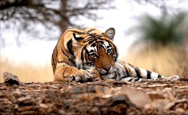 Pench National Park Jungle Safari - Tour