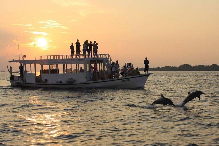 Dolphin Tour - Tour