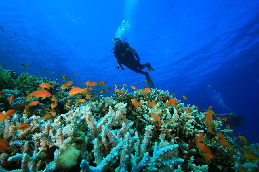 Scuba Diving Packages in Goa - Tour