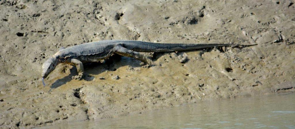 Sundarbans Wildlife Tour - Tour