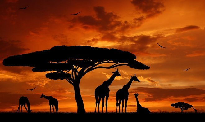 Africa - Collection