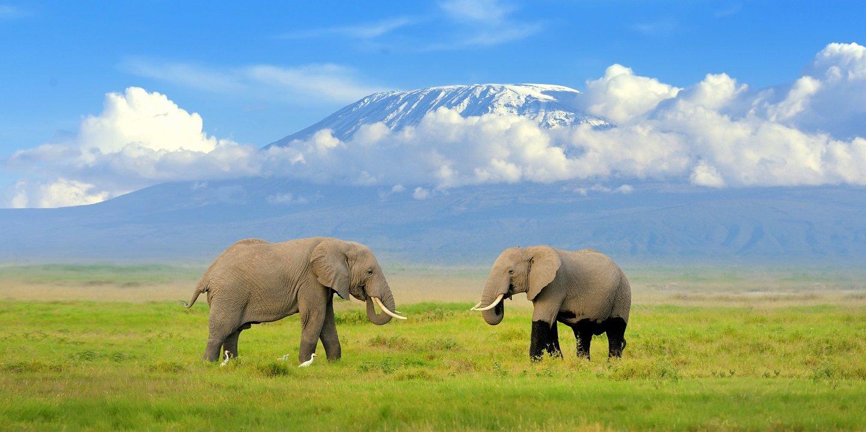 Tanzania - Collection