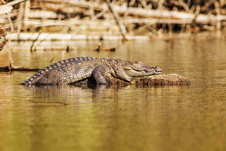 Crocodile Trip - Tour