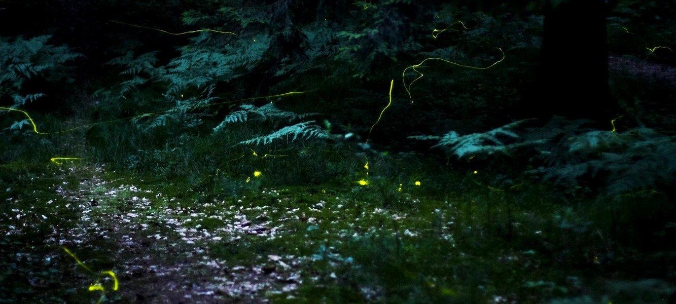 VRangers Fireflies Special Trek To Kothligad - Tour