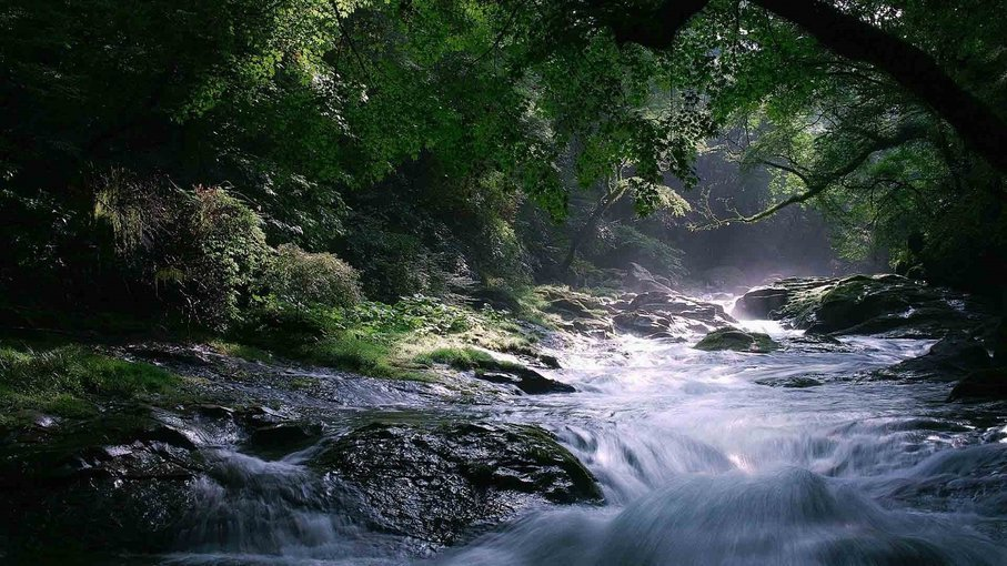 Captivating Coorg - Tour