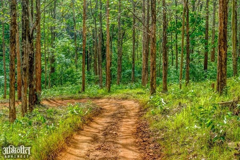 Dandeli Forest Adventure Tour - Tour