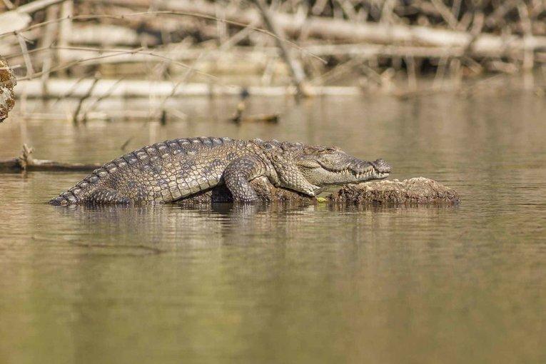 Crocodile spotting and bird watching - Tour