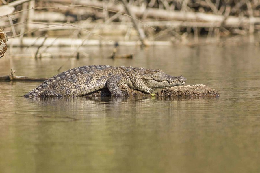 Crocodile spotting and bird watching - Tour