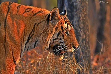 Kanha Wildlife Jungle Safari