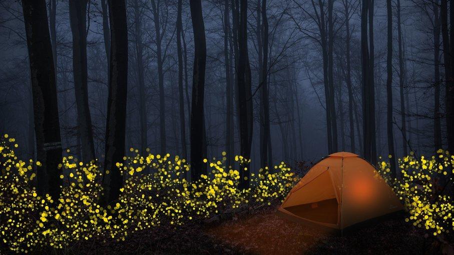 Prabalmachi Fireflies Special Trek - Tour