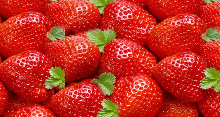 Strawberry Festival Tour Near Mahabaleshwar - Tour