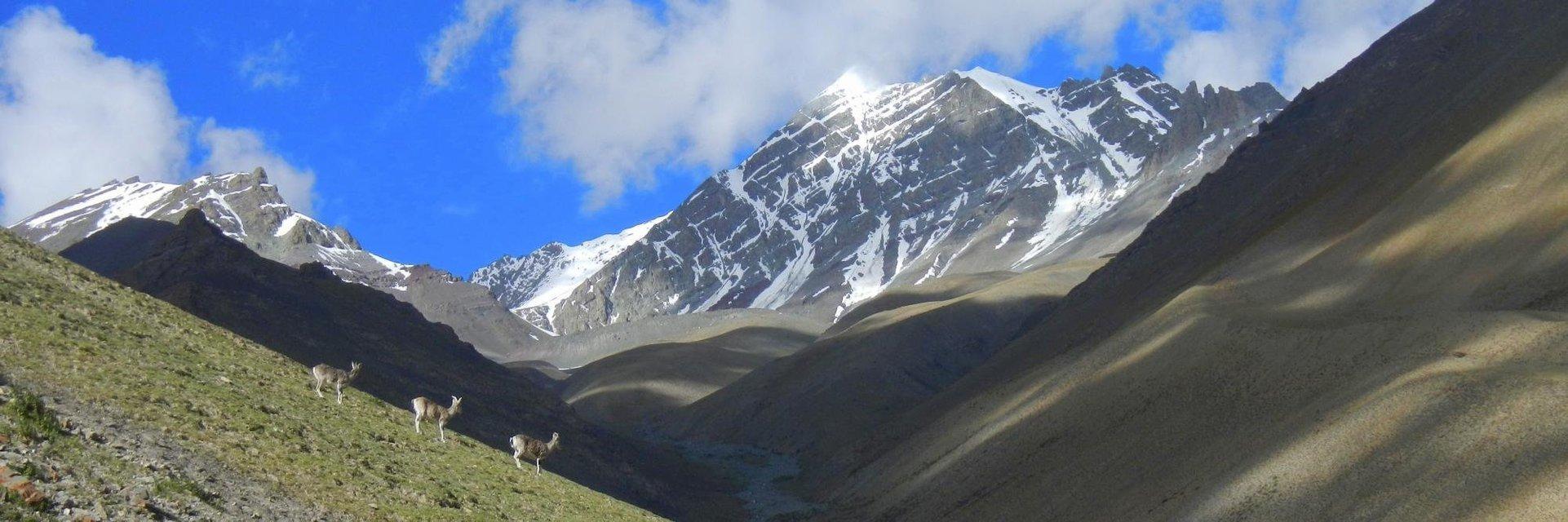 Stok Kangri Climb - Tour