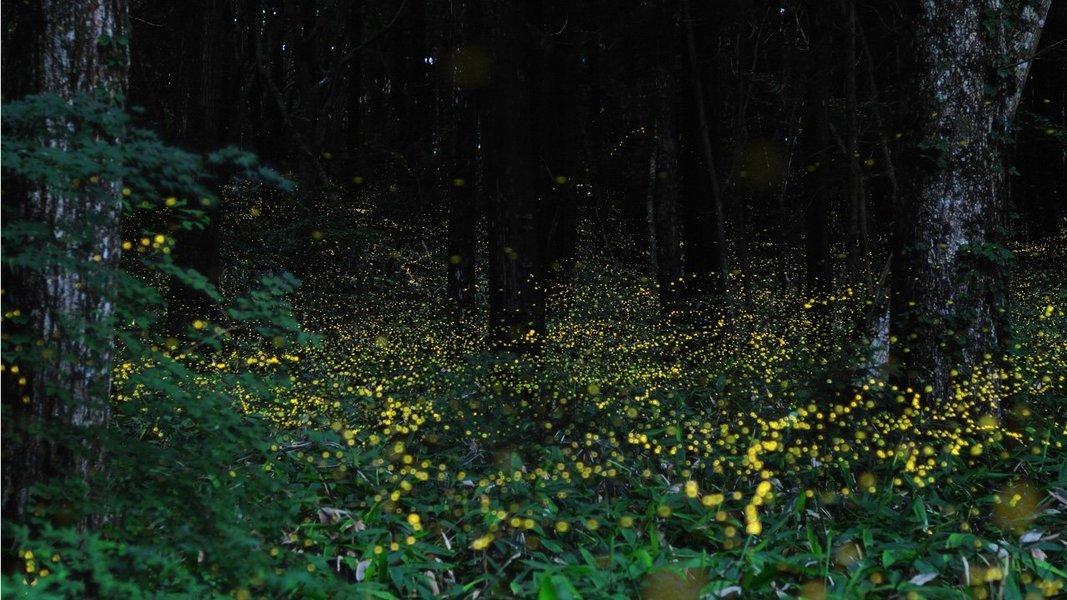 Kondane Cave Fireflies Special Trek and Camp - Tour
