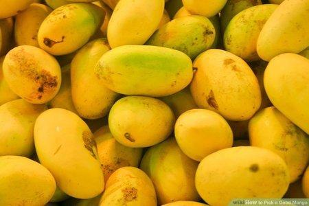 Mango Farm Tour