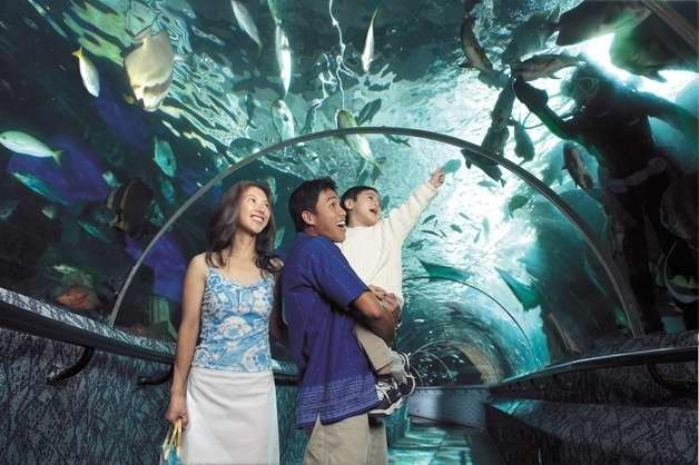 """Under Water World - Pattaya Tour (Half Day)"""" (TICKET ONLY) - Tour"""