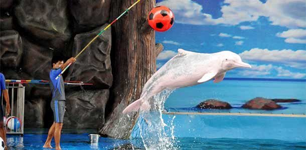 "Pattaya Dolphin Show (Half Day)""(TICKET ONLY) - Tour"