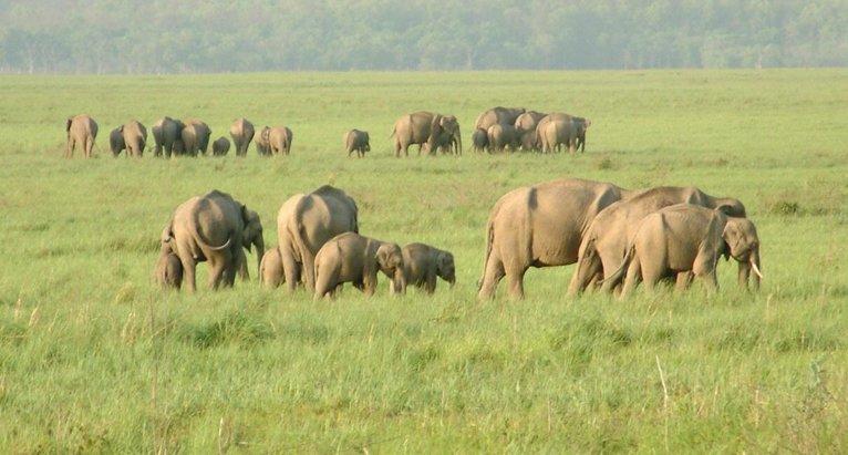 Short Escape to Bandipur National Park - Tour