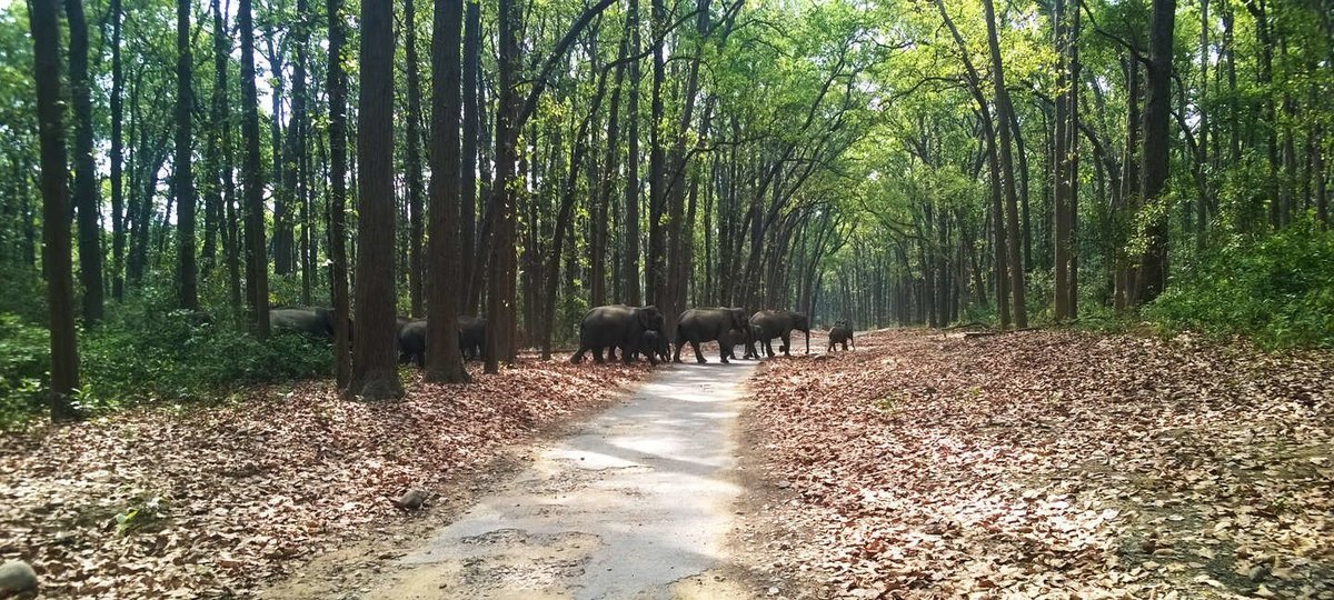 Jim Corbett Tour - Tour