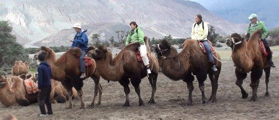 Bacterian Camel Ride (Nubra Valley)