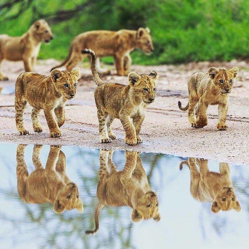 Safaris - Collection