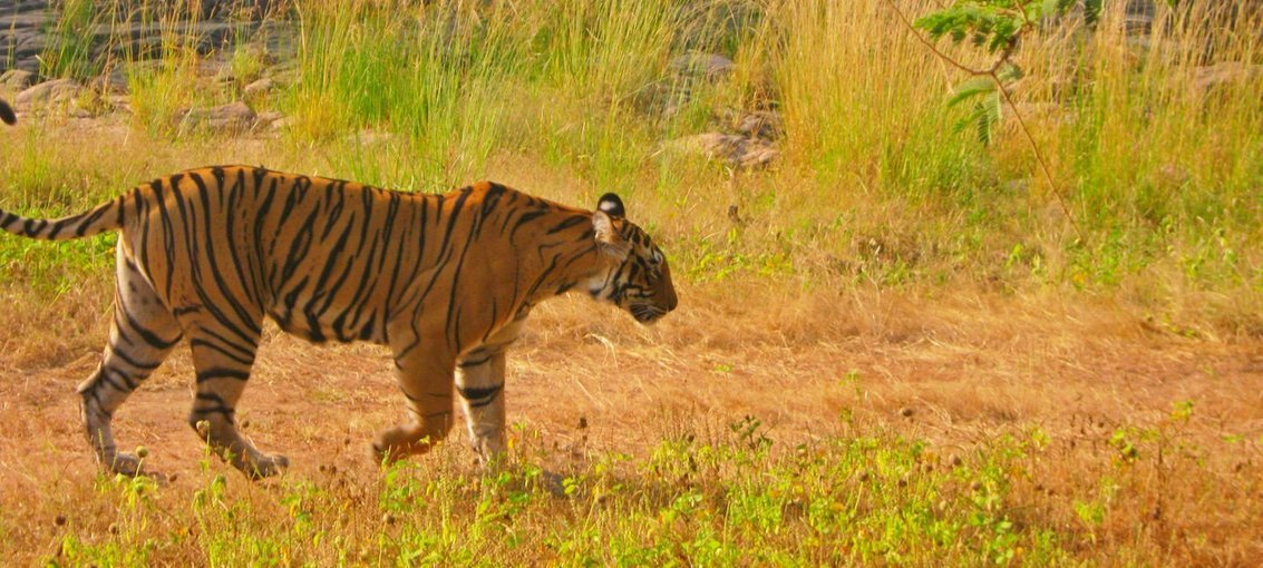 Golden Triangle with Ranthambore National Park - Tour