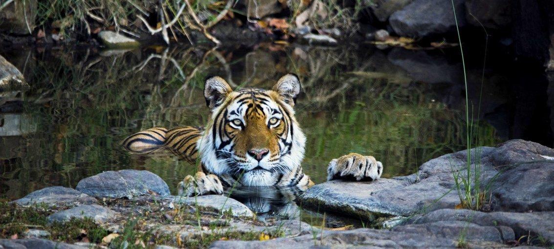 Rajasthan, Taj & Tigers - Tour