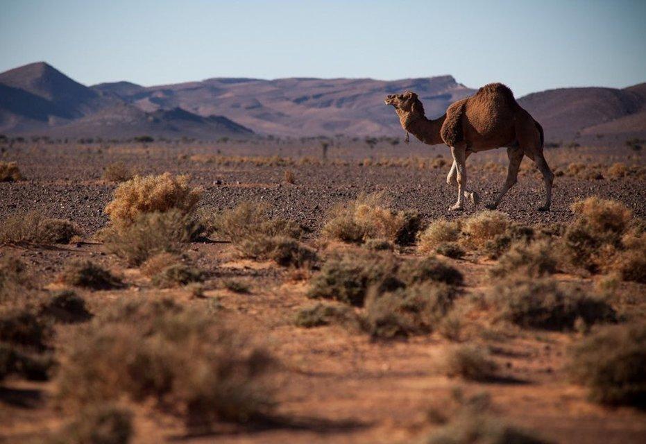 Desert Tour Combined to Fez & Marrakech - Tour